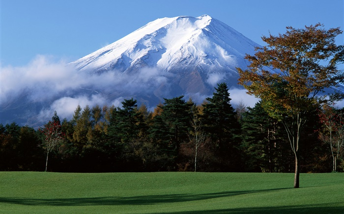 Japan's Mount Fuji, snow, trees, grass, fog Wallpapers Pictures Photos Images