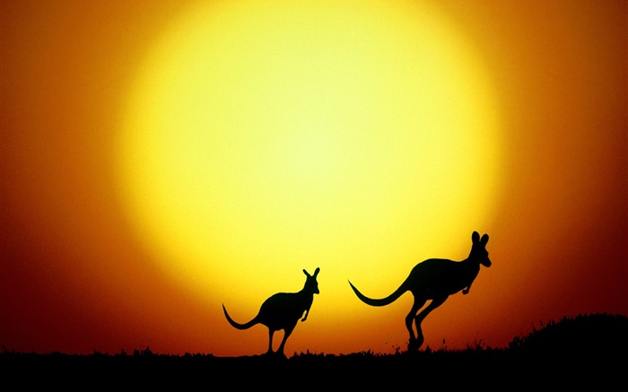 Kangaroo at sunset, Australia Wallpapers Pictures Photos Images