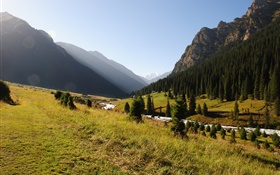 Kyrgyzstan, forest, trees, mountains, morning, grass, river HD wallpaper