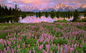 Lake, mountain, pink hyacinth flowers HD wallpaper