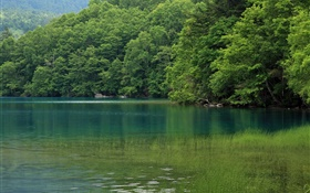 Lake, trees, water grass, Hokkaido, Japan HD wallpaper