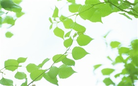 Leaves, green, bokeh, summer HD wallpaper