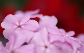Light purple flowers petals HD wallpaper