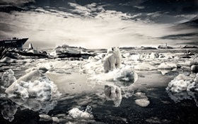 Lonely bear, snow, sea, creative pictures
