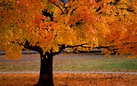 Lonely tree, autumn, yellow leaves HD wallpaper