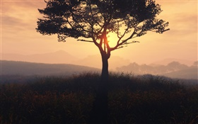 Lonely tree, sunrise, grass, dawn, fog HD wallpaper