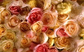 Many rose flowers, yellow and pink