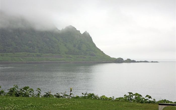 Morning, fog, mountains, sea, coast, grass, Hokkaido, Japan Wallpapers Pictures Photos Images