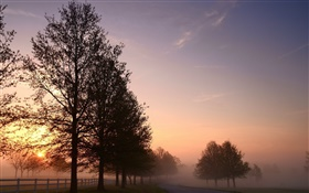 Morning, fog, trees, road, sunrise HD wallpaper