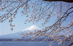 Mount Fuji, Japan, cherry flowers, sea, boat HD wallpaper