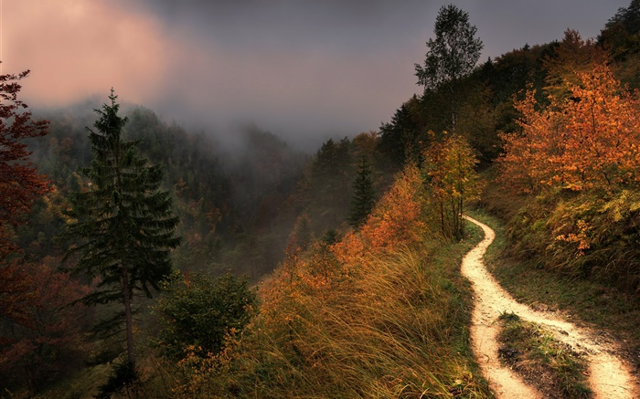 Mountain, fog, trees, footpath, autumn Wallpapers Pictures Photos Images