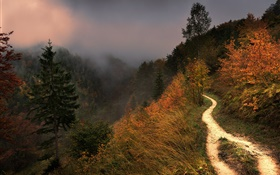 Mountain, fog, trees, footpath, autumn HD wallpaper