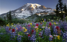 Mountains, wildflowers HD wallpaper