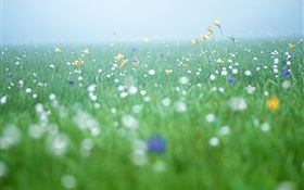 Nature scenery, grass, wildflowers HD wallpaper