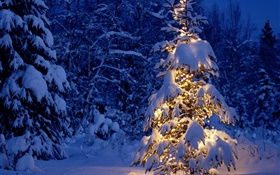 Night, trees, lights, thick snow, Christmas HD wallpaper