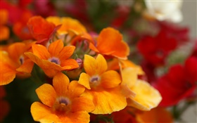 Orange flower petals close-up HD wallpaper