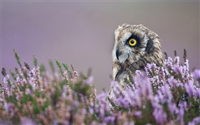 Owl in the lavender flowers HD wallpaper