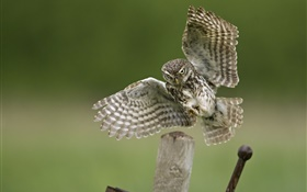 Owl landing, wings, stump HD wallpaper