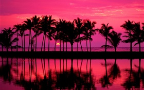 Palm trees, sketch, red sky, sunset, sea HD wallpaper