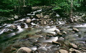 Pebbles, creek, forest