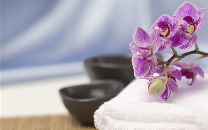 Phalaenopsis, towels, SPA theme Wallpapers Pictures Photos Images