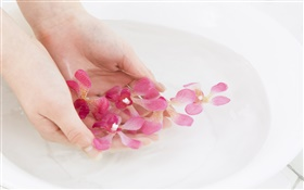 Pink orchid flower petals, water, hands HD wallpaper