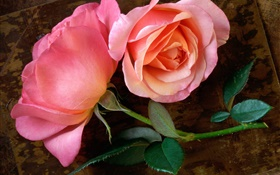 Pink rose flower on the wood board HD wallpaper