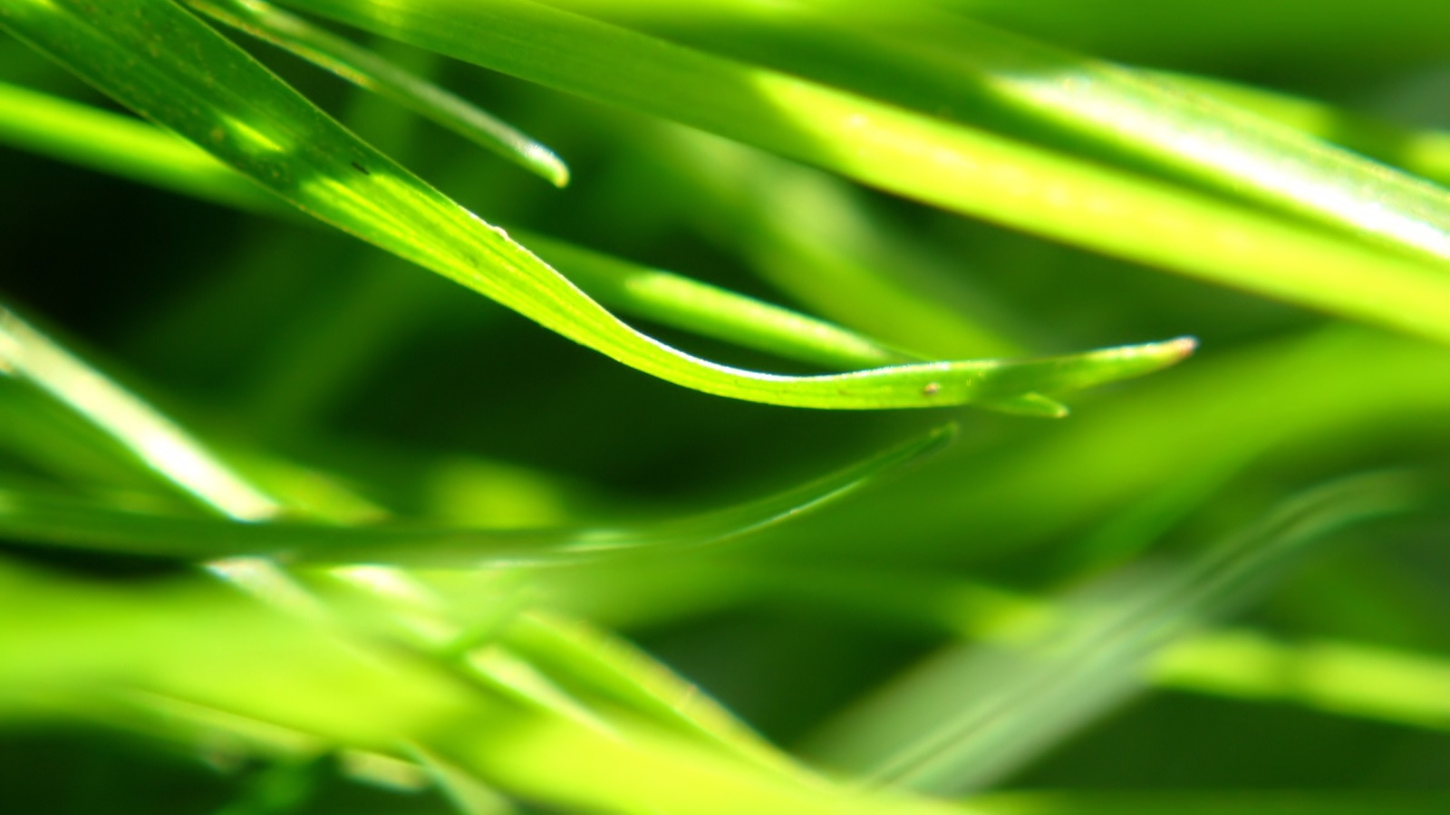 Plants close-up, grass, green 1600x900 wallpaper