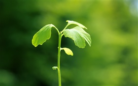 Plants close-up, green, spring, bokeh HD wallpaper