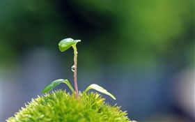 Plants close-up, seeds germinate HD wallpaper