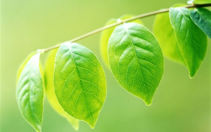 Plants, twigs, green leaves close-up Wallpapers Pictures Photos Images
