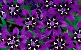 Purple petals flowers close-up HD wallpaper