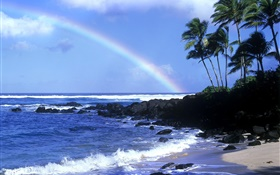 Rainbow, blue sea, coast, palm trees, Hawaii, USA HD wallpaper