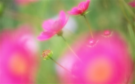 Red flowers blur style HD wallpaper
