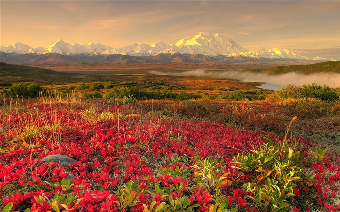Red wildflowers, mountains, mist, dawn Wallpapers Pictures Photos Images