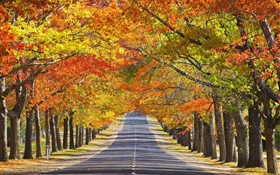 Road, trees, red leaves, autumn HD wallpaper