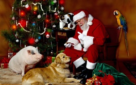 Santa Claus and Animals, Christmas lights HD wallpaper