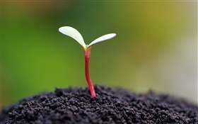 Seeds germinate, soil HD wallpaper