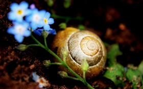 Snail on ground, little blue flowers HD wallpaper