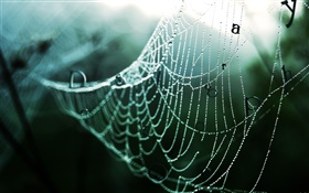 Spider web after rain, water drops, words, creative pictures HD wallpaper
