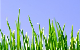 Spring, green grass, blue sky HD wallpaper