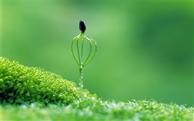 Spring, green style, buds, dew HD wallpaper