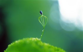 Spring plant bud close-up, glare HD wallpaper