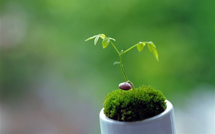 Spring, plants, shoots, green background Wallpapers Pictures Photos Images