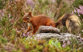 Squirrel, grass, stones HD wallpaper