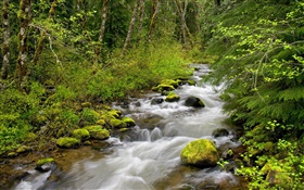 Still Creek, Mt. Hood National Forest, Oregon, USA HD wallpaper
