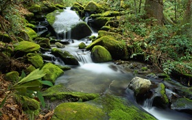 Stones, moss, creek, stream, water HD wallpaper