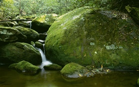 Stones, moss, creek, water, trees HD wallpaper