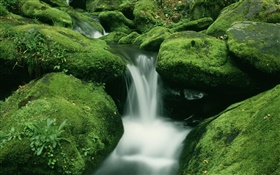 Stones, moss, creek, waterfall HD wallpaper