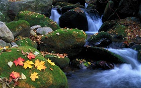 Stones, moss, stream, fall leaves HD wallpaper